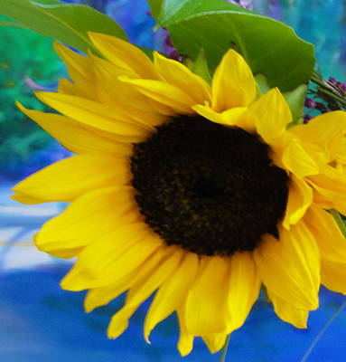 Photograph - Sunflower Too by Shannon Grissom