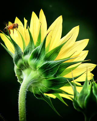 Art Print featuring the photograph Sunflower With Bee by Lynne Jenkins