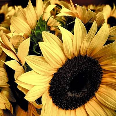 Sunflowers Wall Art - Photograph - Sunflowers - Fl by Joel Lopez