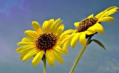 Photograph - Sunflowers - Hdr by Lynnette Johns