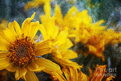 Photograph - Sunflowers by Alyce Taylor