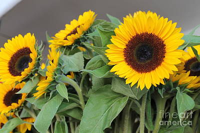 Photograph - Sunflowers At Pikes Market by Pamela Walrath