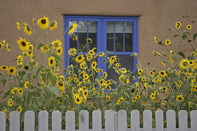 Sunflowers Bloom In A Garden Art Print by Ralph Lee Hopkins