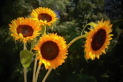 Sunflowers Art Print by Boyd Alexander