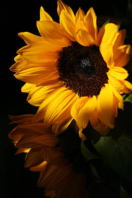 Photograph - Sunflowers by Dorothy Cunningham