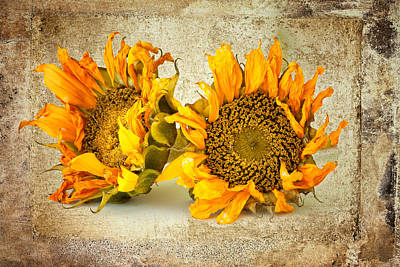 Sunflowers No 413 Art Print by James Bethanis