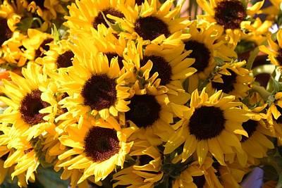 Sunflowers Art Print by Paulette Thomas