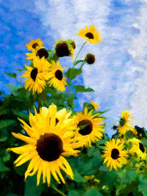 Photograph - Sunflowers by Steve Zimic