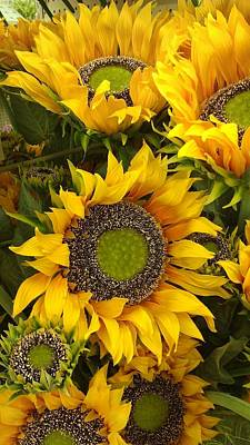 Photograph - Sunflowers by Tim Donovan