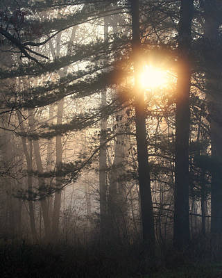 Photograph - Sunlight Breaking Through The Foggy Forest by Mark J Seefeldt