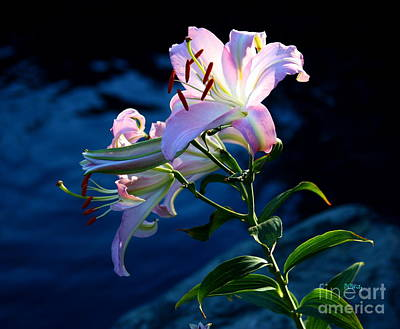 Photograph - Sunlight Lily by Patrick Witz