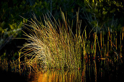 Photograph - Sunlight On Grass Merritt Island Nwr by Rich Franco
