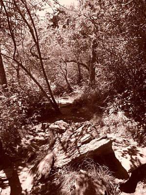Photograph - Sunlight On The Mount Pisgah Trail by Joel Deutsch