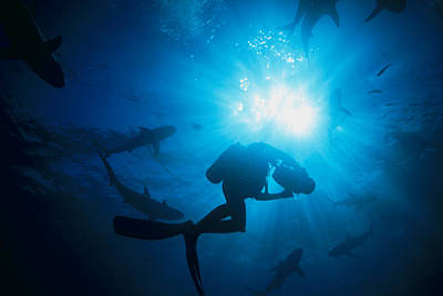 Sunlight Silhouetting A Diver Swimming Art Print by Nick Caloyianis