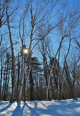 Photograph - Sunlight Through Birches by Mary McAvoy