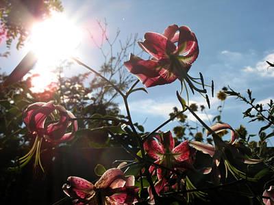 Sunlight Through Flowers Art Print