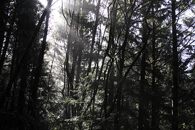 Photograph - Sunlight Through The Trees - 0005 by S and S Photo
