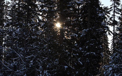 Photograph - Sunlight Through The Trees - 0008 by S and S Photo