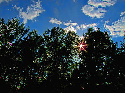 Photograph - Sunlight Thrugh The Treetops by Debbie Portwood