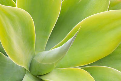 Photograph - Sunlit Agave by Heidi Smith