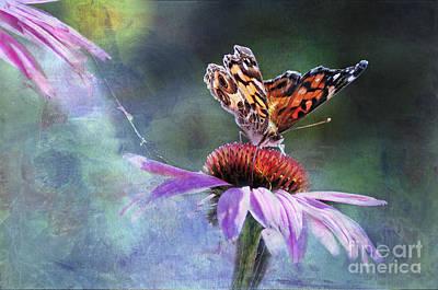 Lady Butterfly Photograph - Sunlit by Betty LaRue