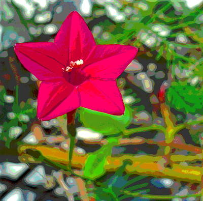 Impressionist Style Photograph - Sunlit Cypress Vine Blossom With Sun Dappled Foliage by Padre Art