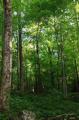 Photograph - Sunlit Forest by Megan Cohen