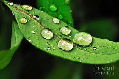 Amy Weiss - Sunlit Water Droplets by Kaye Menner