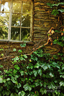 Sunlit Window And Grapevines Art Print by HD Connelly