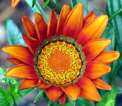 Photograph - Sunny Bloom by Chris Anderson
