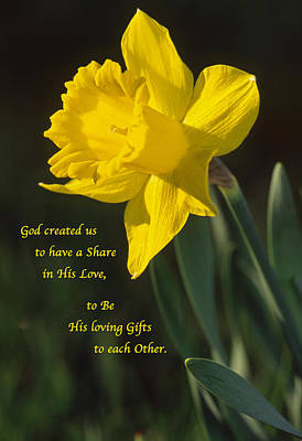 Sunny Daffodil With Quote Art Print