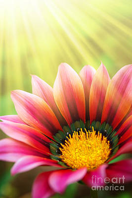 Seed Sprouting Photograph - Sunny Daisy by Carlos Caetano