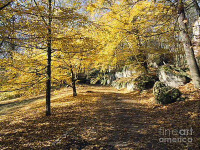 Sunny Day In The Autumn Park Art Print by Michal Boubin