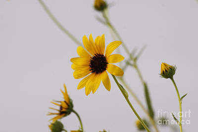Photograph - Sunny Day by Shawn Naranjo