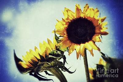 Photograph - Sunny Days by Traci Cottingham