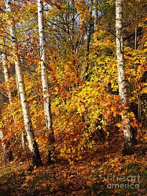 Autumn Leaf Photograph - Sunny Fall Day by Lutz Baar