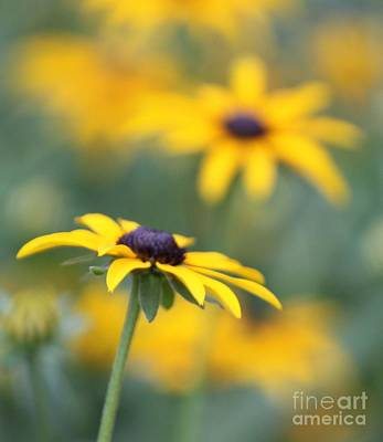 Photograph - Sunny Flower by Marilyn West