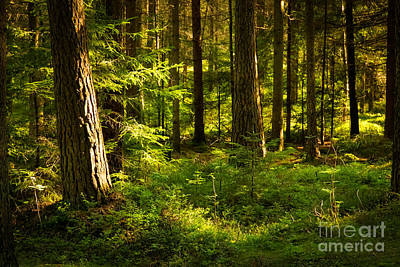 Forest Walk Photograph - Sunny Forest by Lutz Baar