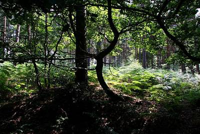 Photograph - Sunny Glade by Ed Lukas