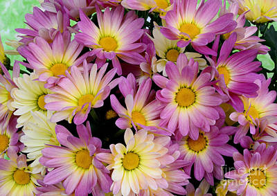 Photograph - Sunny Mums by Jim And Emily Bush