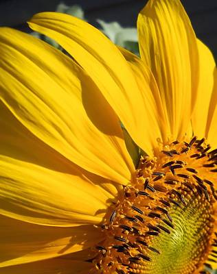 Photograph - Sunny Side Up by Lynnette Johns