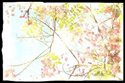 Sunny Skies Above Art Print