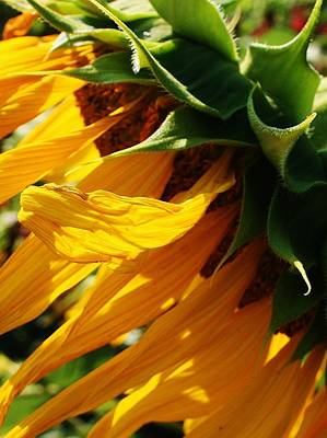 Photograph - Sunny Times by Bruce Bley