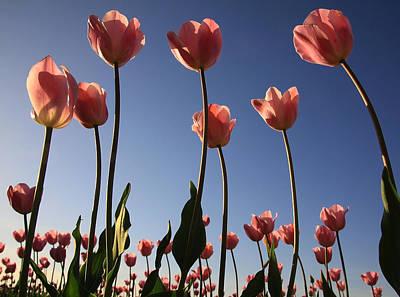 Photograph - Sunny Tulips by Steve McKinzie