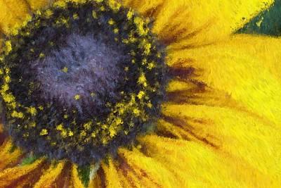 Photograph - Sunny Yellow by Heidi Smith