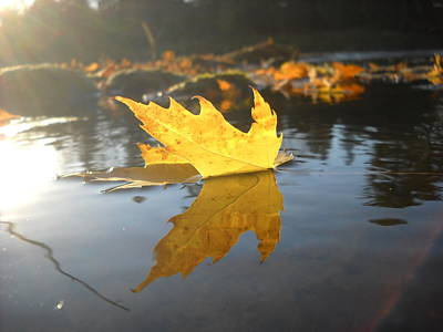 Photograph - Sunrise And Floating Maple Leaf by Kent Lorentzen