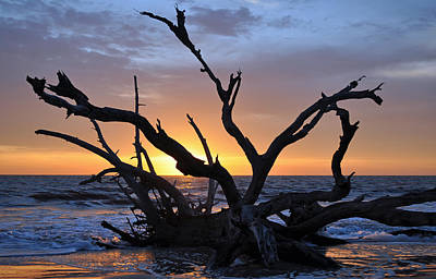 Sunrise At Driftwood Beach 5.2 Art Print