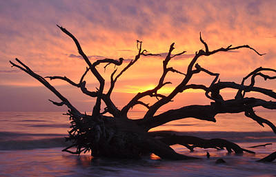 Sunrise At Driftwood Beach 6.1 Art Print