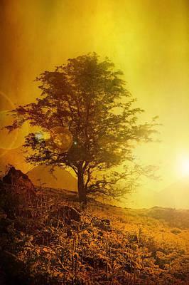Sunrise Flare Art Print by Svetlana Sewell