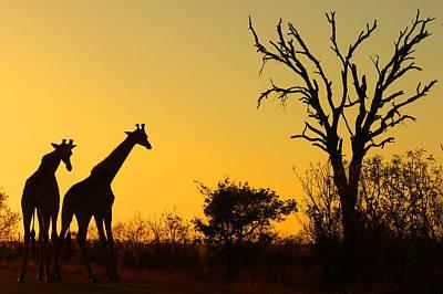 Giraffe Photograph - Sunrise In African Bush by Arno Meintjes Wildlife